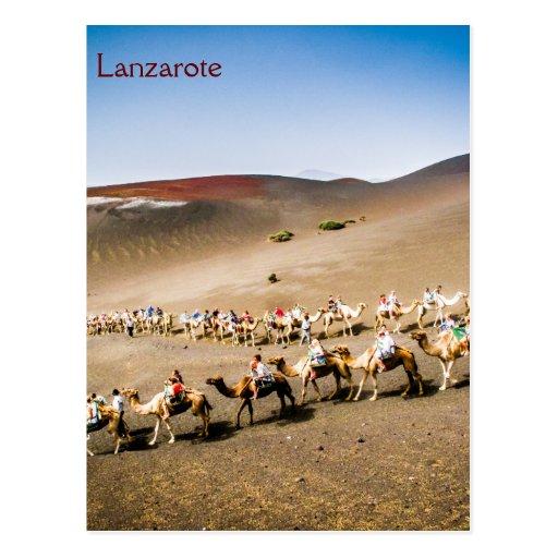 Kamel-Zug in Lanzarote Postkarte