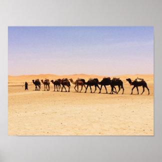 Kamele in der Wüste Poster