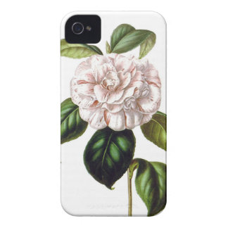 Kamelien-Blume iPhone 4 Fall iPhone 4 Case-Mate Hülle