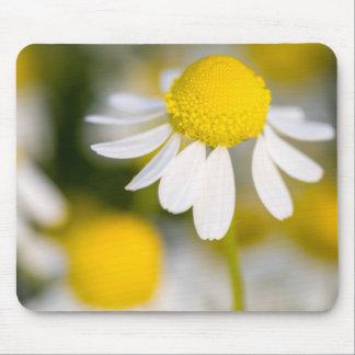 Kamillen-Blumennahaufnahme, Ungarn Mousepad