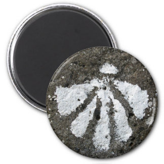 Kamm-Muschel-Muschel-Magnet Runder Magnet 5,1 Cm