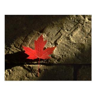 Kanada-Ahornblatt Postkarte
