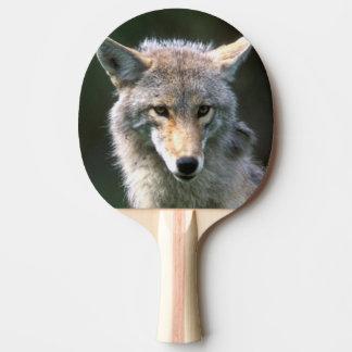 Kanada, Britisch-Columbia, Kojote (Canis latrans) Tischtennis Schläger