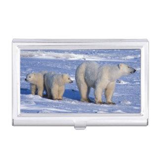 Kanada, Manitoba, Churchill. Eisbärmutter Visitenkarten Etui