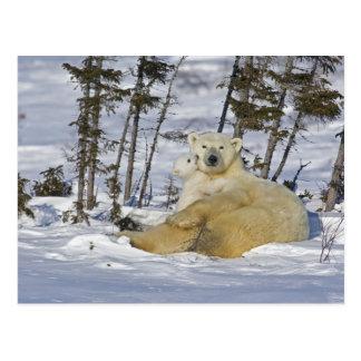 Kanada, Manitoba, Wapusk Nationalpark. Polare 7 Postkarte