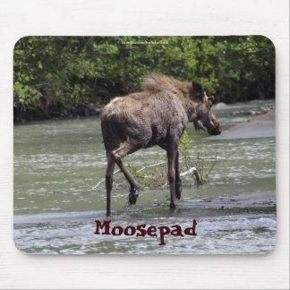 Kanadische Elch-lustige wild lebende Tiere Mousepads