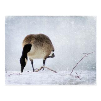 Kanadische Gans Postkarte