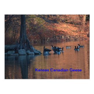 Kanadische Gans-Postkarte Kansas Postkarte