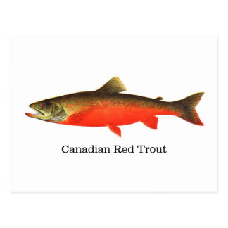 Kanadische rote Forelle-Fische Postkarte