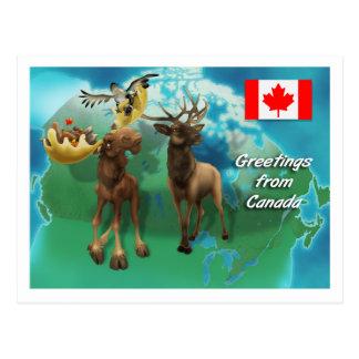 Kanadischer Elch-Elch-Biber und Gans Postkarte