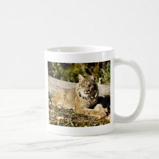Kanadischer Luchs Kaffeetasse