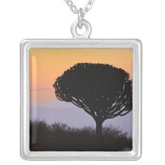 Kandelaber-Baum silhouettiert am Sonnenaufgang, Versilberte Kette