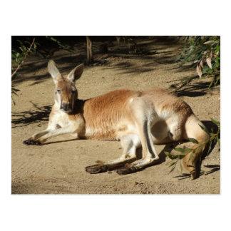 Känguru-Postkarte Postkarte