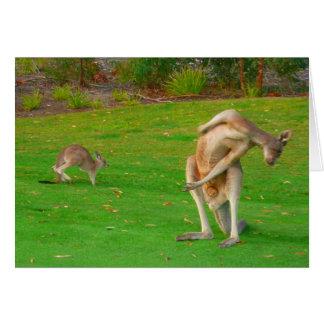 Känguru u. joey karte
