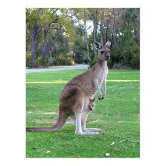 Känguru und Joey Postkarte