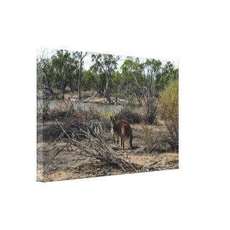 Känguru unterdessen beim Billabong, Leinwanddruck