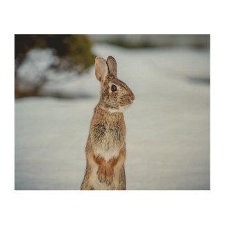Kaninchen 10x8 im Schnee Holzleinwand