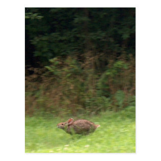 Kaninchen auf dem Lauf Postkarte