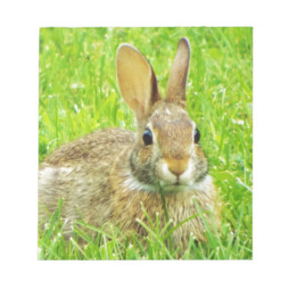 Kaninchen Notizblock