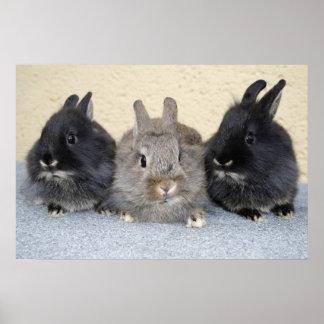Kaninchen Poster