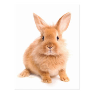 Kaninchen Postkarte