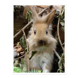 Kaninchen, rabbit postkarten