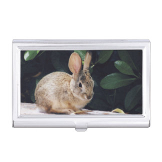 Kaninchen-Visitenkartehalter Visitenkarten Dose
