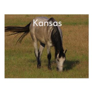 Kansas-Pferd in einer Weide POSTKARTE
