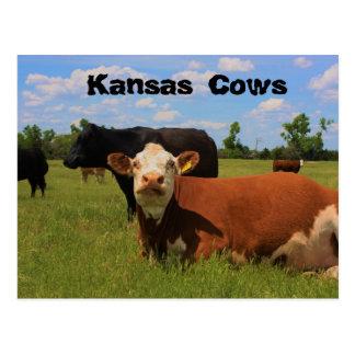 Kansas schüchtert Hereford und Angus-Kühe Postkarte