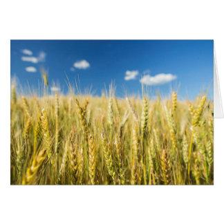 Kansas-Weizen Grußkarte