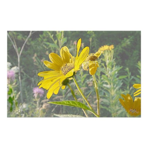 Kansas-Wildblume Personalisiertes Büropapier