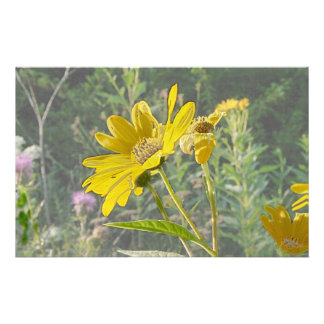 Kansas-Wildblume Personalisierte Büropapiere