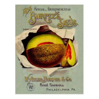 Kantalupen-Frucht-Samen-Werbung Vintag Postkarte