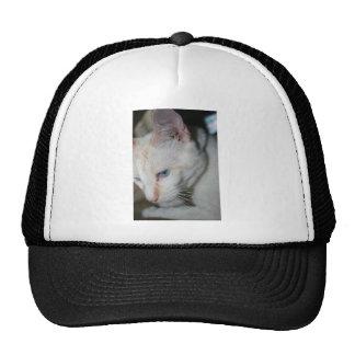 Kappe, weiße Katze Baseballkappe
