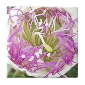 Kapriolen-Blumen-Blüte Fliese