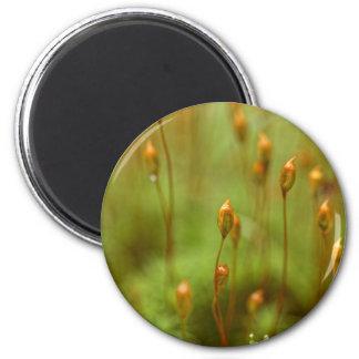 Kapseln des gemeinen Haarmooses Runder Magnet 5,7 Cm