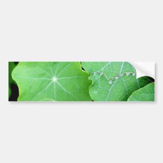 Kapuzinerkäse-Blätter mit Wasser-Tropfen Autoaufkleber