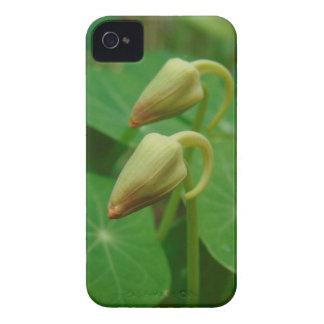 Kapuzinerkäse-Knospen iPhone 4 Hüllen