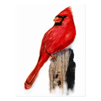 Kardinal auf Posten Postkarte