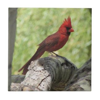 Kardinal Fliese