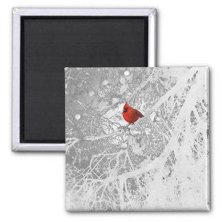 Kardinal im Winter Quadratischer Magnet