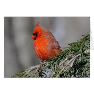 Kardinal in den Schneegrußkarten Grußkarte