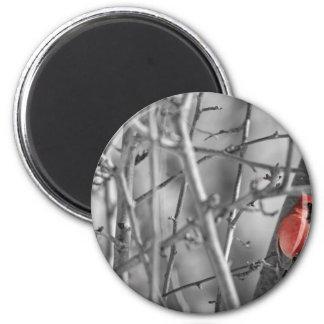 Kardinal in einem Baum Runder Magnet 5,7 Cm