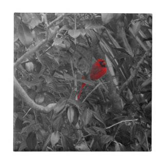 Kardinal in einer Baumfliese Fliese