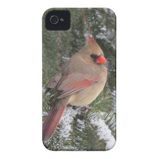Kardinal iPhone 4 Case-Mate Hüllen
