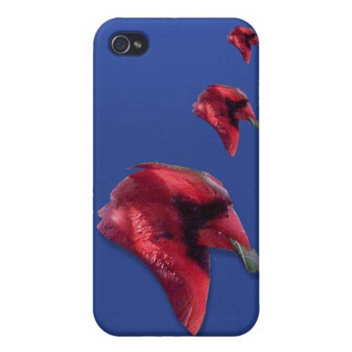 Kardinal iphone Fall iPhone 4/4S Hülle