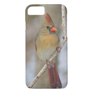 Kardinal iPhone Fall (weiblich) iPhone 8/7 Hülle