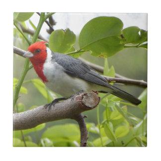 Kardinal mit rotem Schopf Keramikfliese