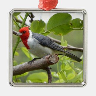 Kardinal mit rotem Schopf Silbernes Ornament