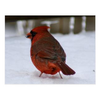 Kardinal Postkarte
